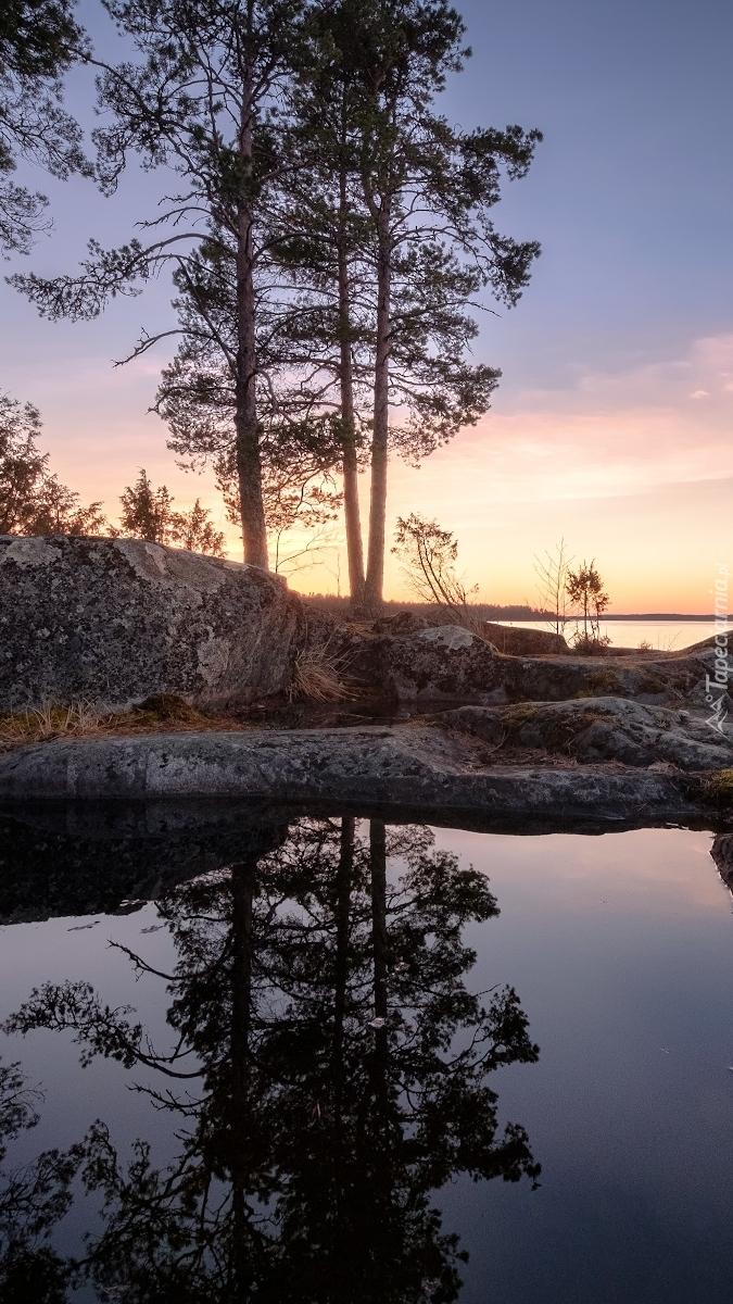 Odbicie drzew w jeziorze