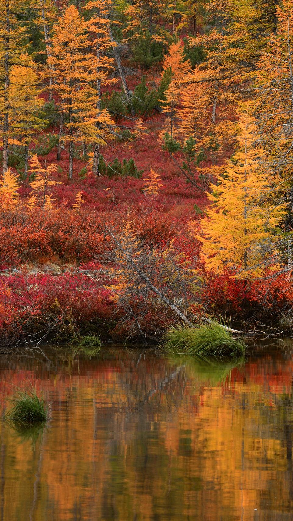 Odbicie drzew w jeziorze Jack London