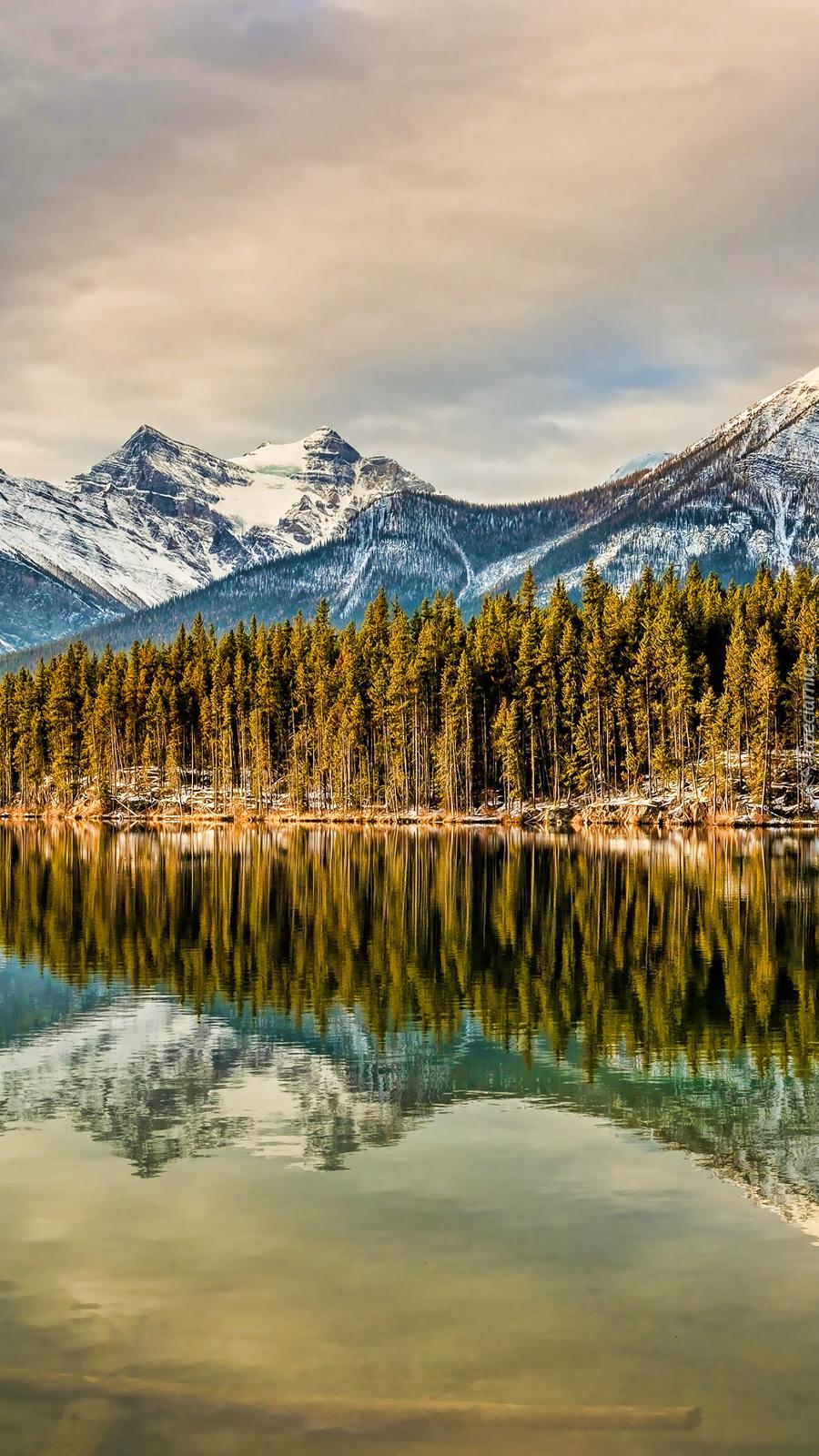 Odbicie lasu i ośnieżonych gór w jeziorze
