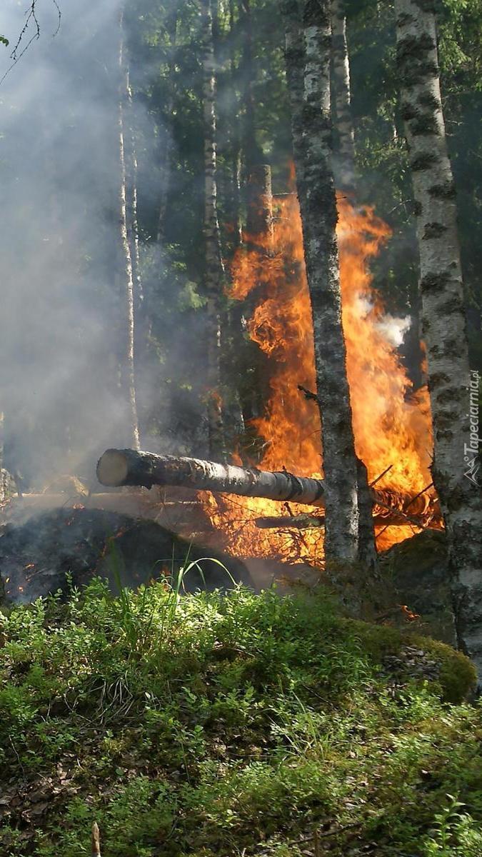 Ogień w lesie