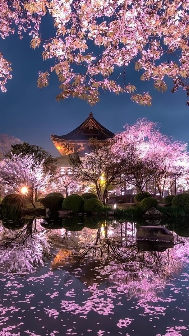 Ogród japoński o zmierzchu