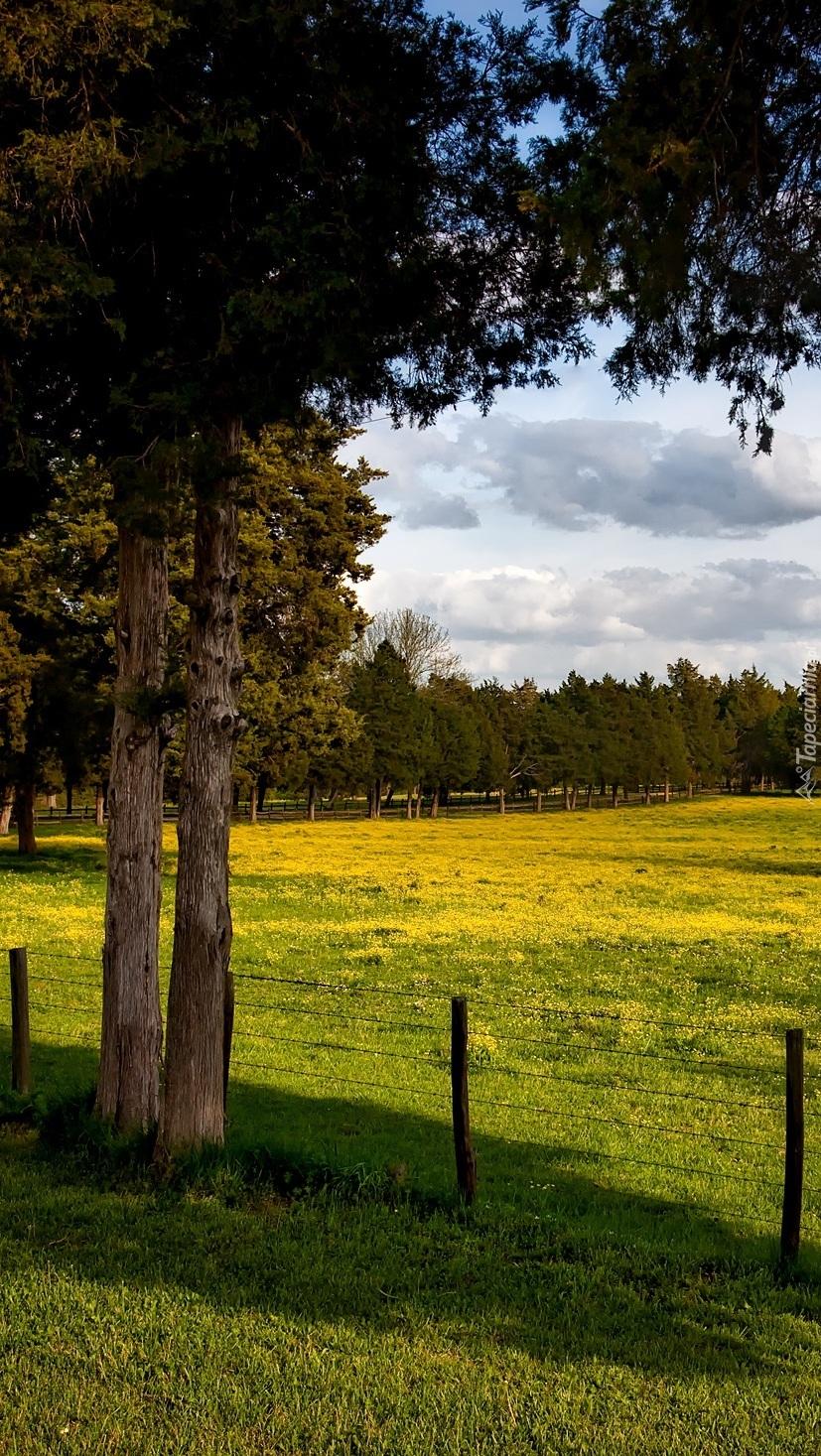 Ogrodzona łąka