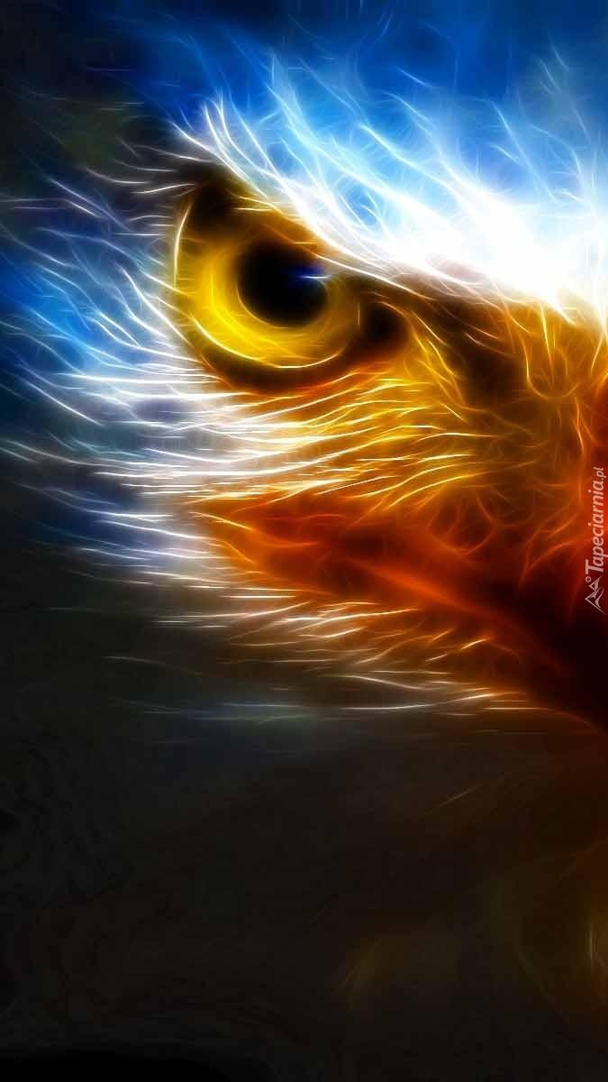 Oko orła w grafice