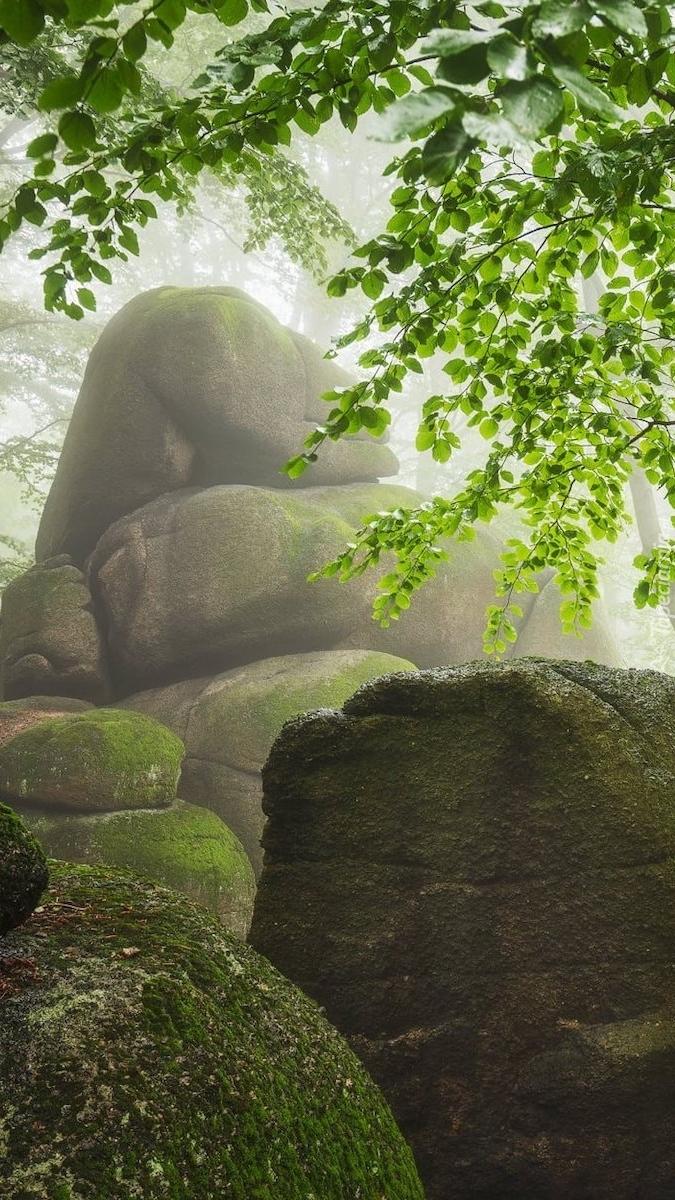Omszałe głazy pod drzewami we mgle