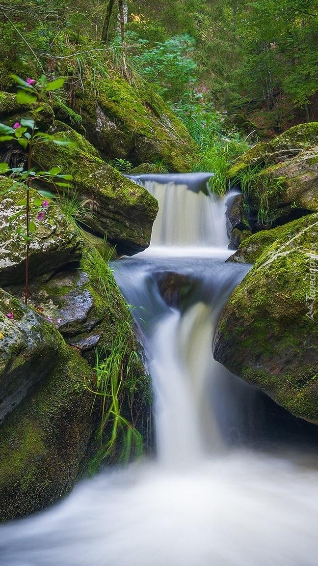 Omszałe głazy w leśnej rzece