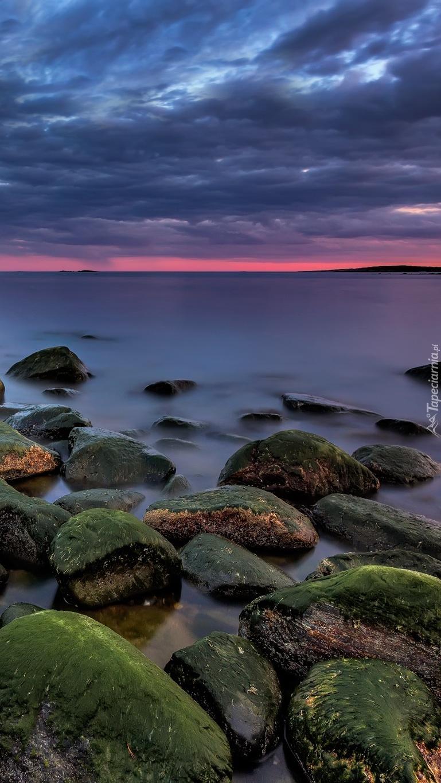 Omszałe kamienie na brzegu morza