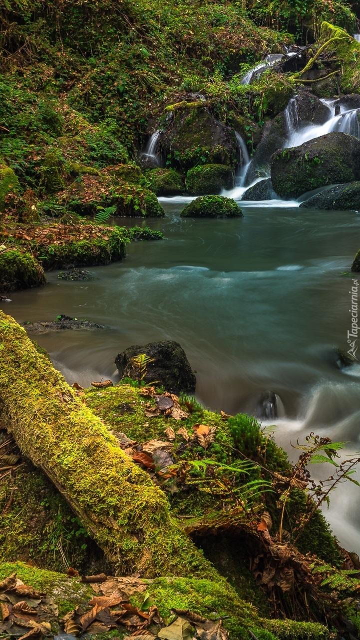 Omszałe kamienie na brzegu rzeki