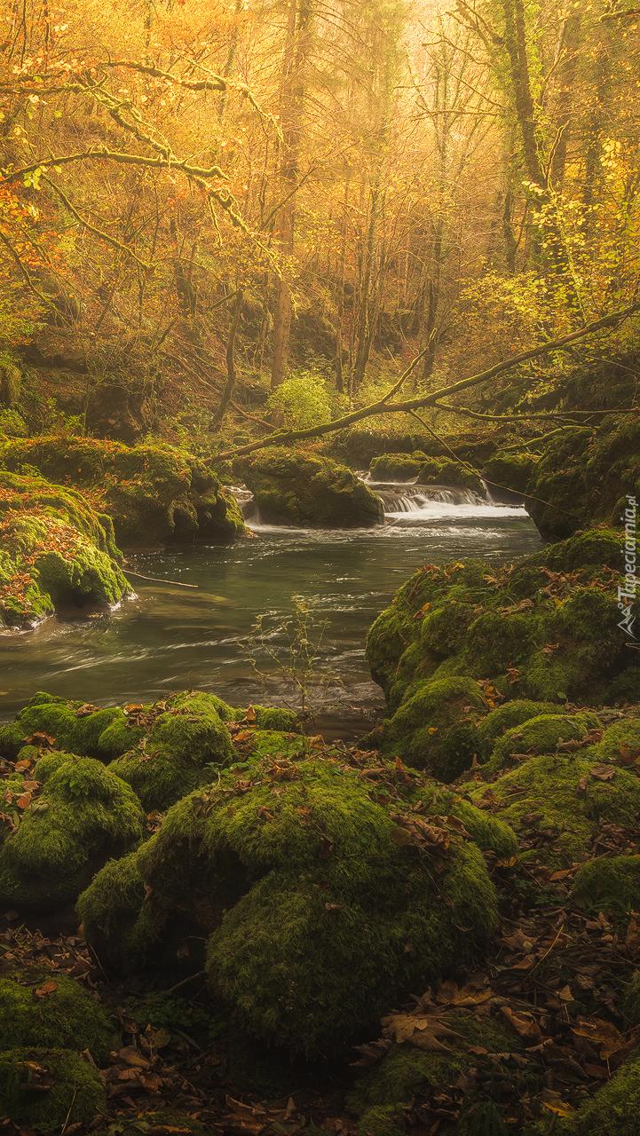 Omszałe kamienie nad leśną rzeką