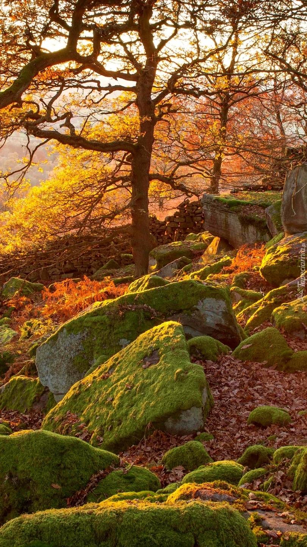 Omszałe kamienie pod drzewami