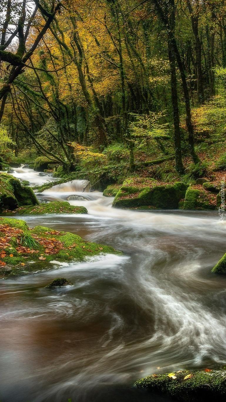 Omszałe kamienie przy rzece