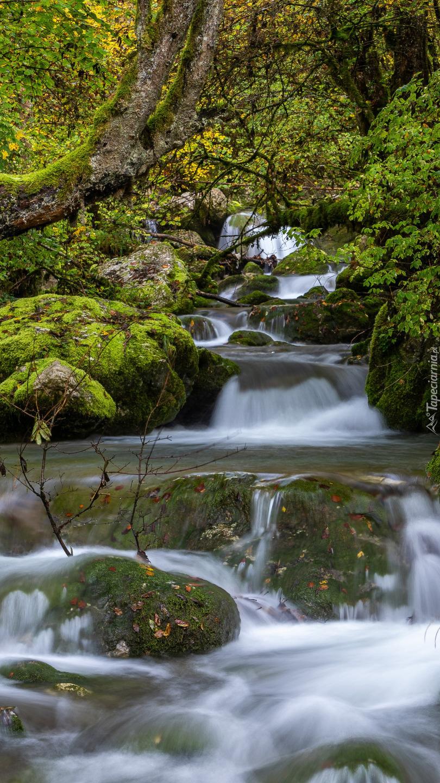 Omszałe kamienie przy rzece w lesie