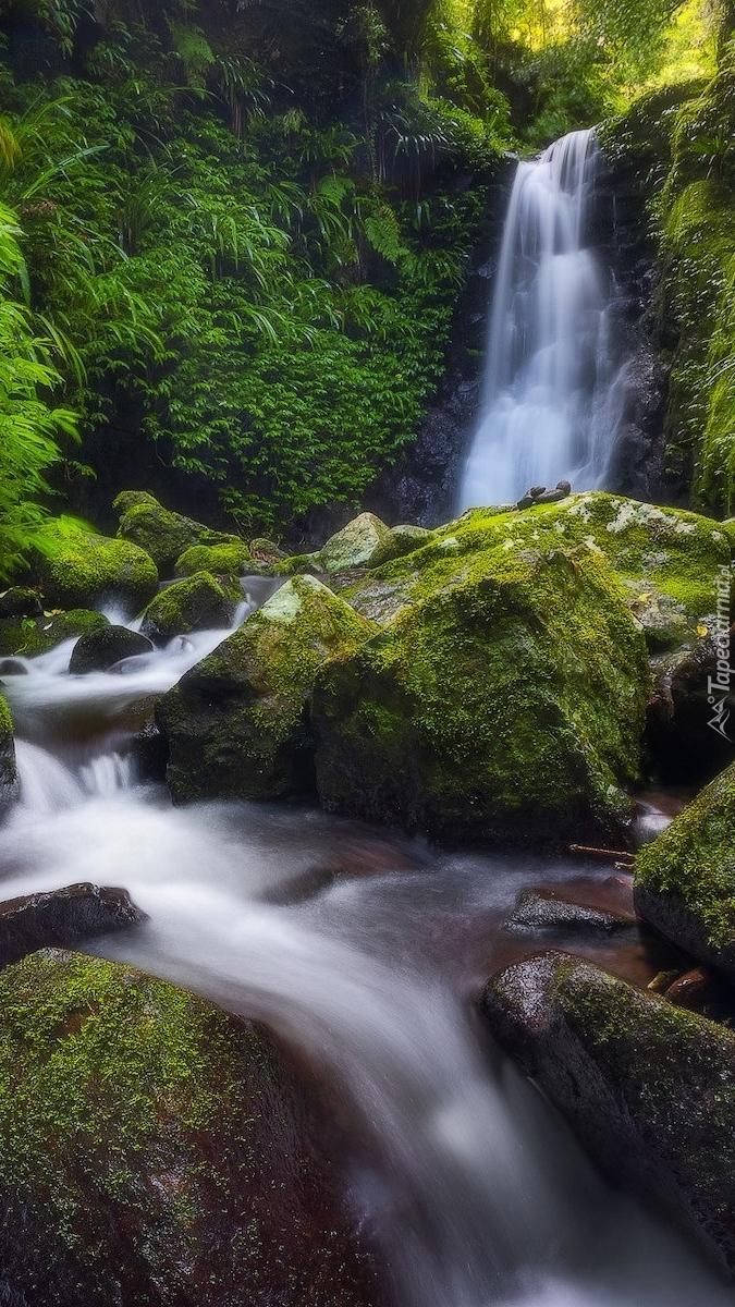 Omszałe kamienie przy wodospadzie Gwongurai Falls