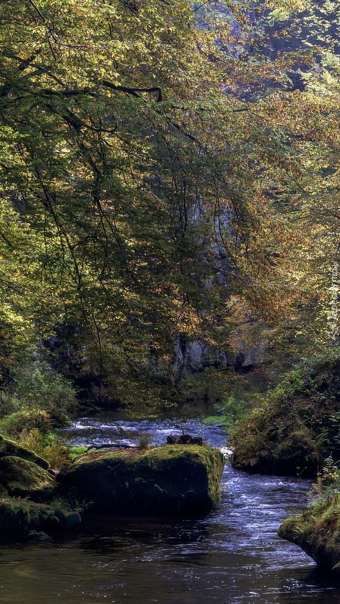 Omszałe kamienie w leśnej rzece
