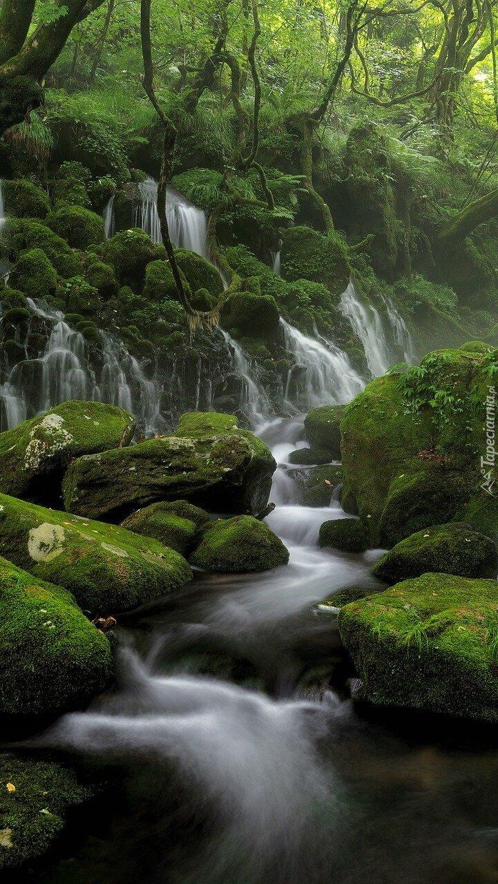 Omszałe kamienie w leśnym strumyku