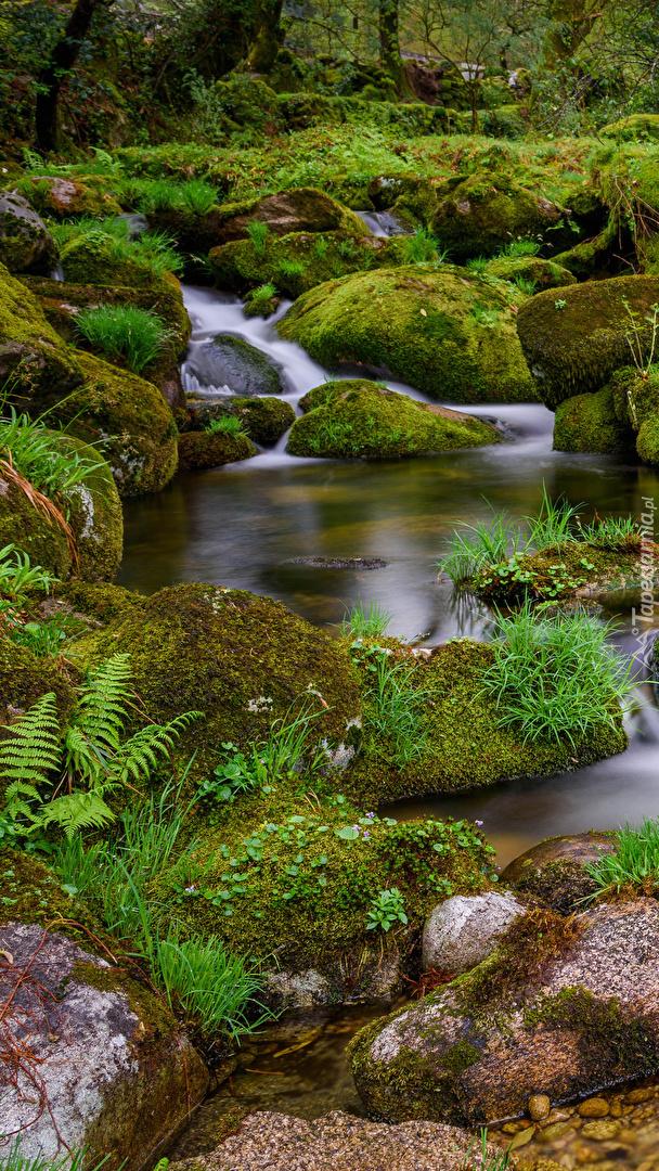 Omszałe kamienie w potoku