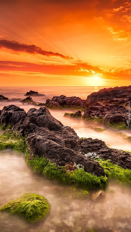 Omszałe nadmorskie skały o zachodzie słońca
