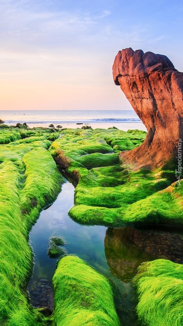 Omszałe skały na brzegu morza