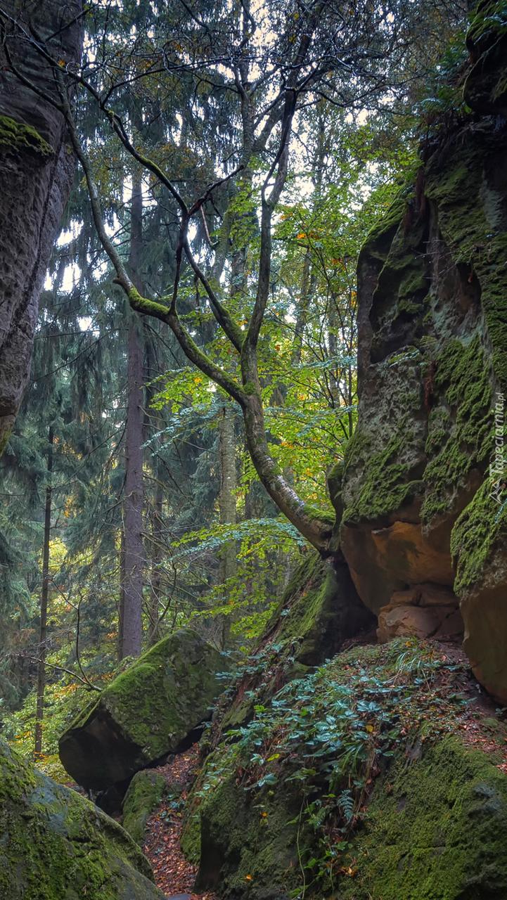 Omszałe skały w lesie