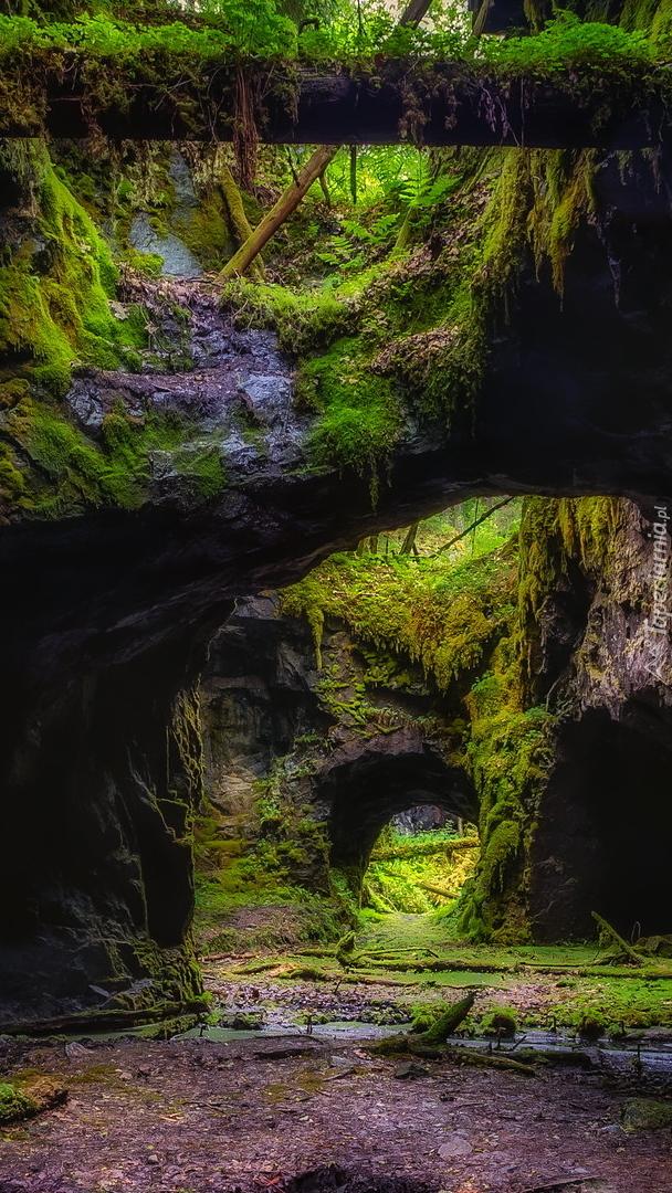 Omszałe skały w wąwozie Hogbergfaltet