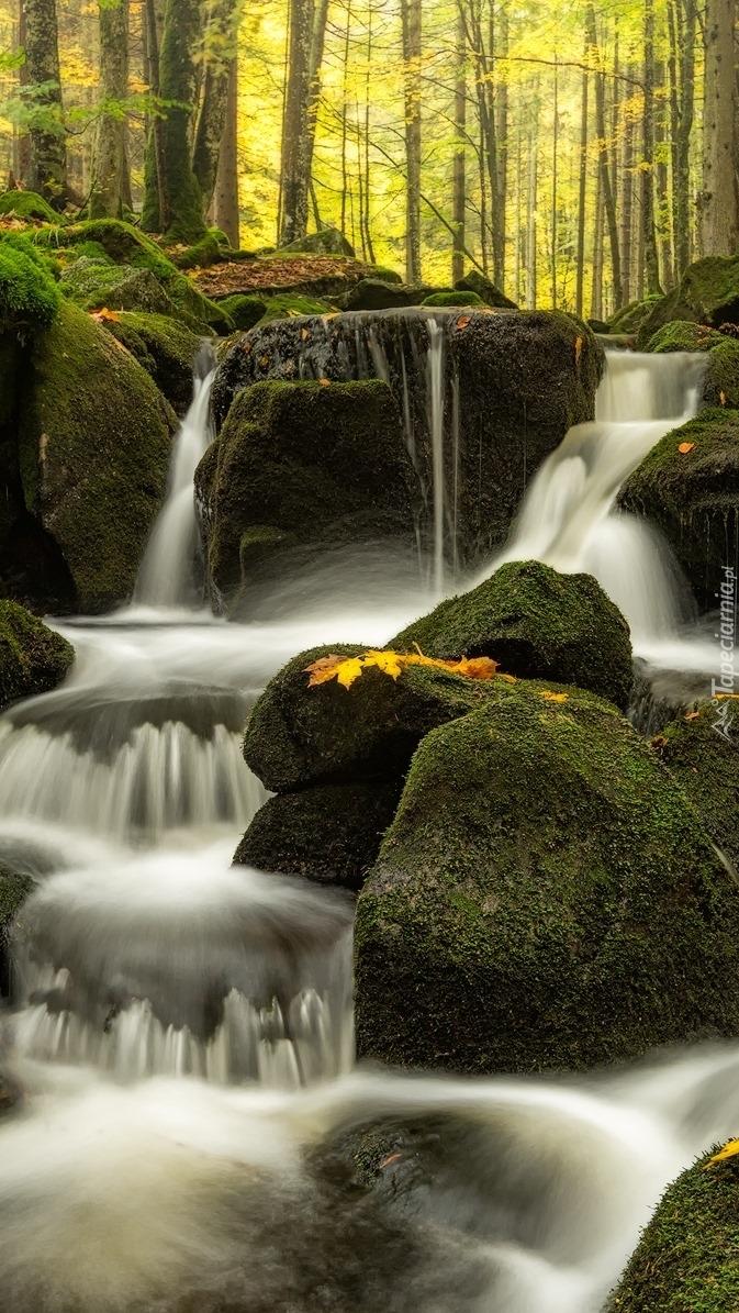 Omszone kamienie w potoku