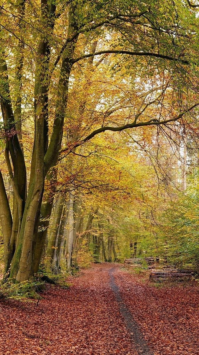 Opadłe liście na drodze w jesiennym lesie