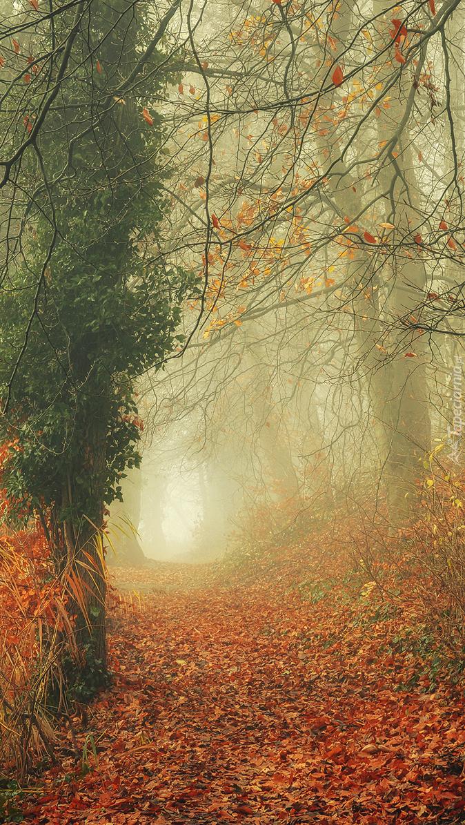Opadłe liście na drodze w lesie