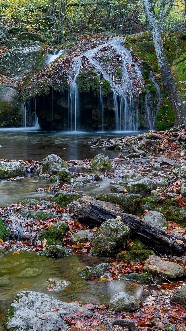 Opadłe liście na kamieniach w rzece