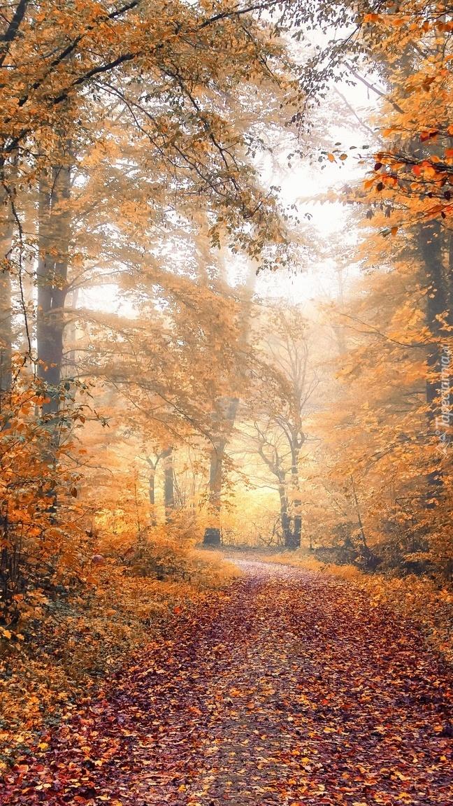 Opadłe liście na leśnej drodze
