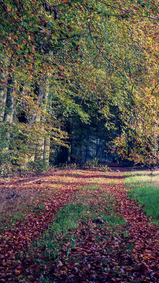 Opadłe liście na leśnej ścieżce
