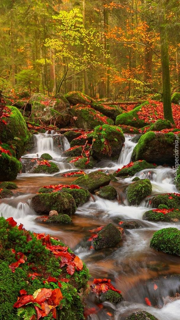 Opadłe liście na omszałych kamieniach w rzece