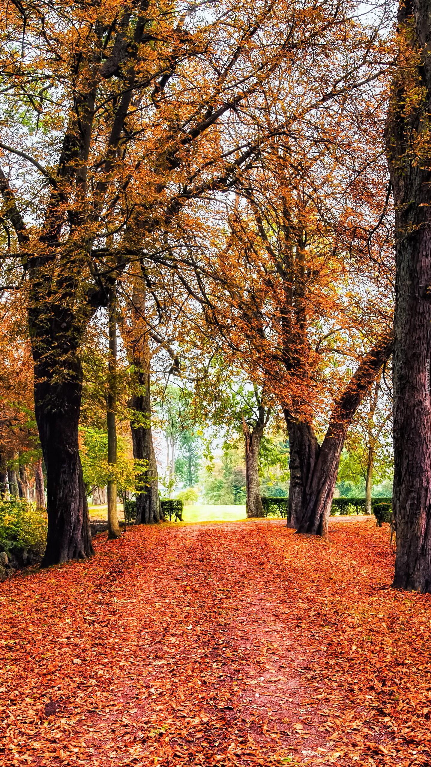 Opadłe liście na parkowej alejce