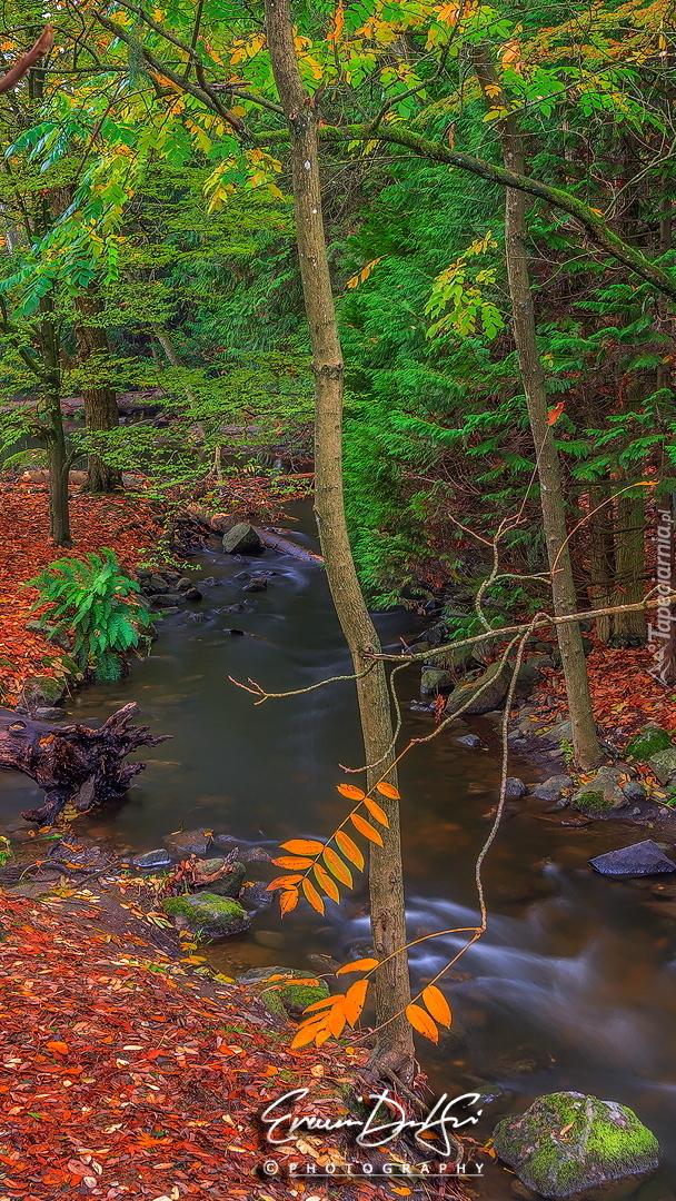 Opadłe liście nad rzeką