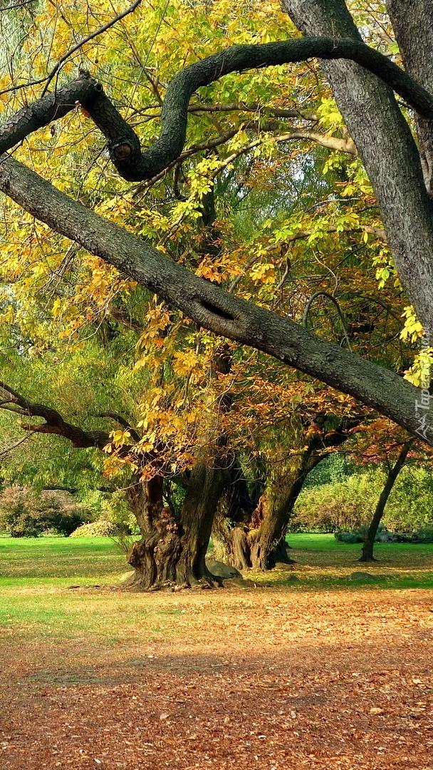 Opadłe liście pod drzewem
