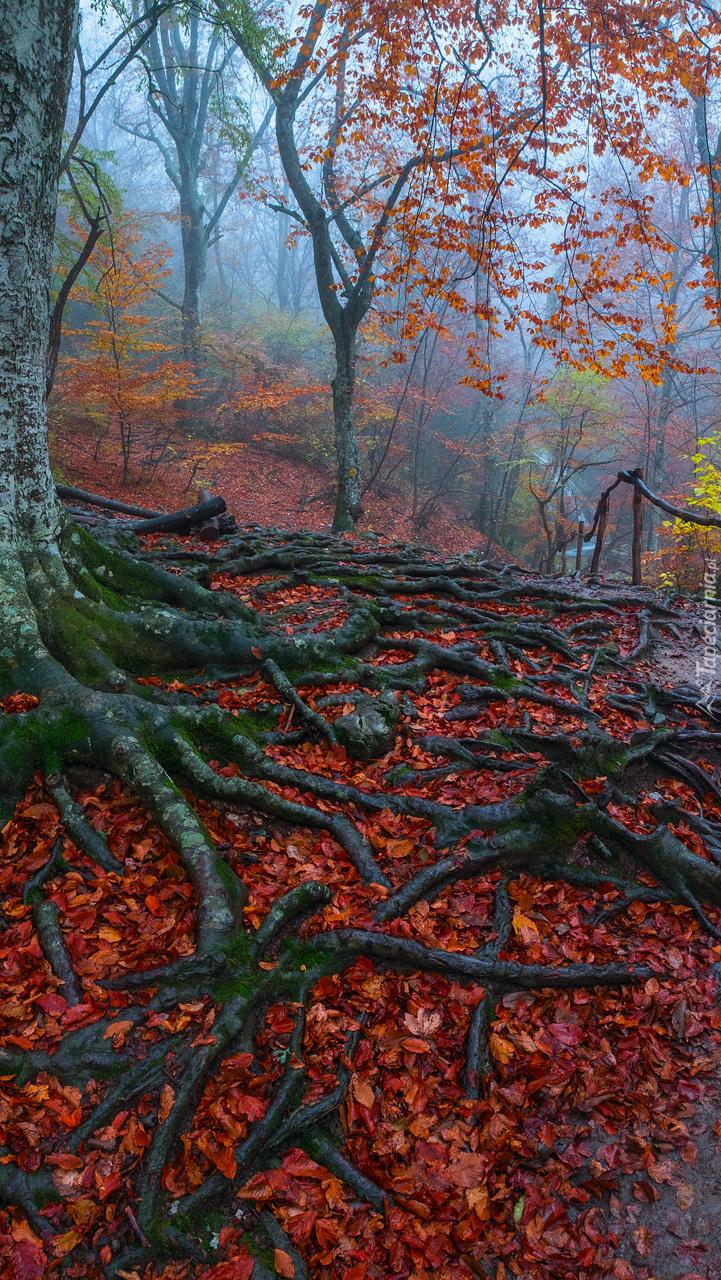 Opadłe liście pośród korzeni drzewa