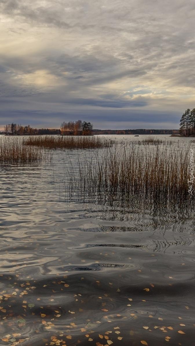 Opadłe liście w jeziorze