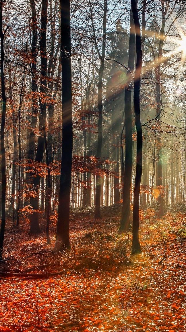 Opadłe liście w słonecznym lesie