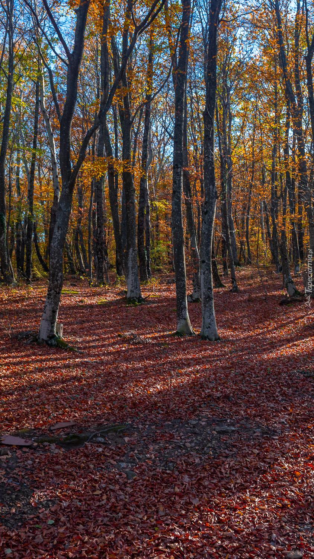 Opadłe liście wokół drzew
