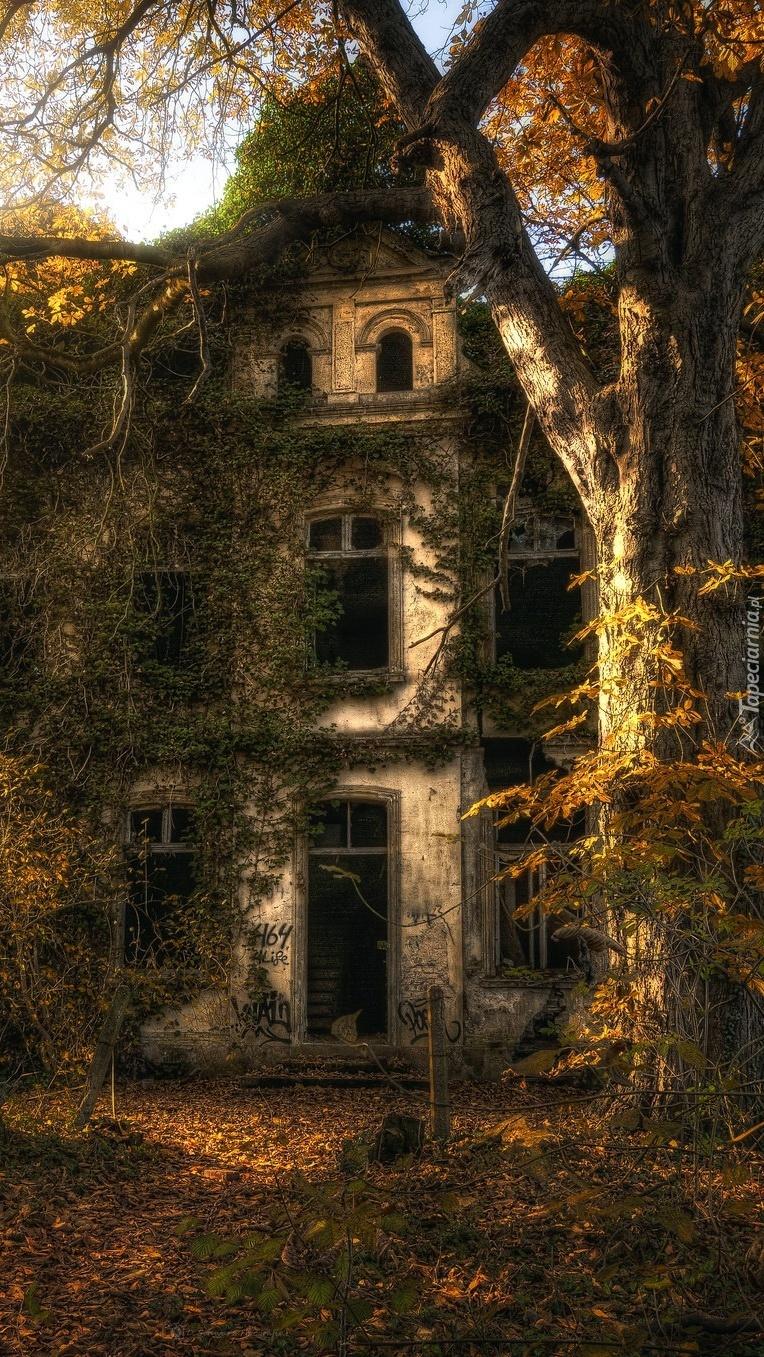 Opuszczony dom pod drzewem