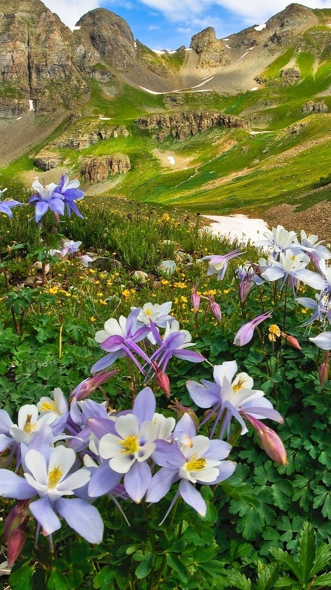 Orliki na tle gór San Juan Mountains