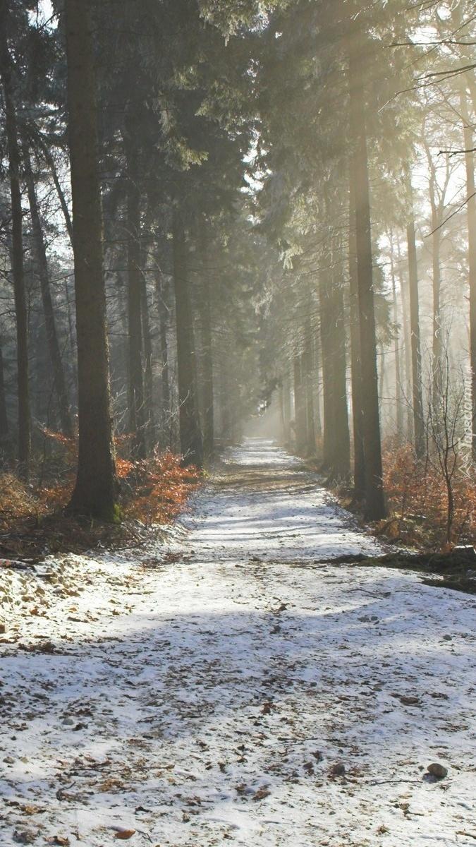 Ośnieżona droga w lesie