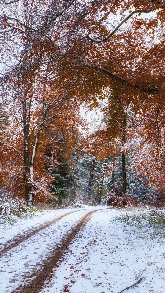 Ośnieżona leśna droga