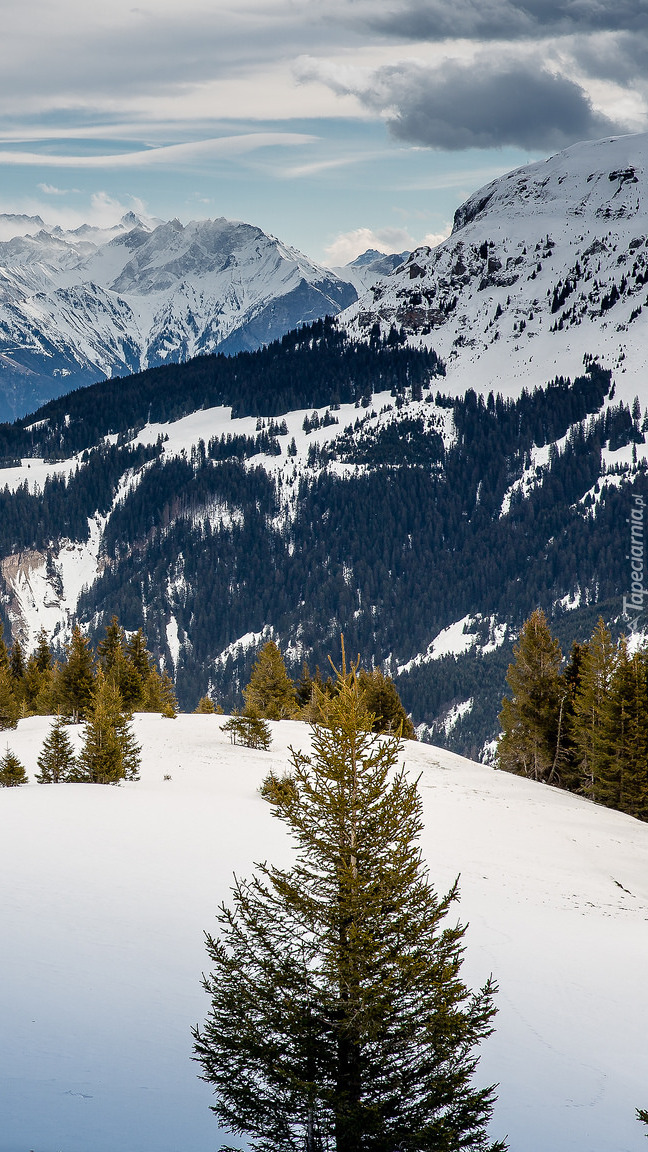 Ośnieżone Alpy Glarneńskie