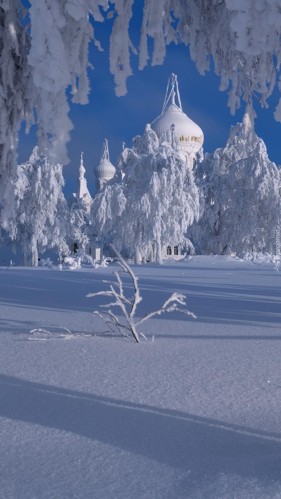 Ośnieżone drzewa i cerkiew w Białej Górze