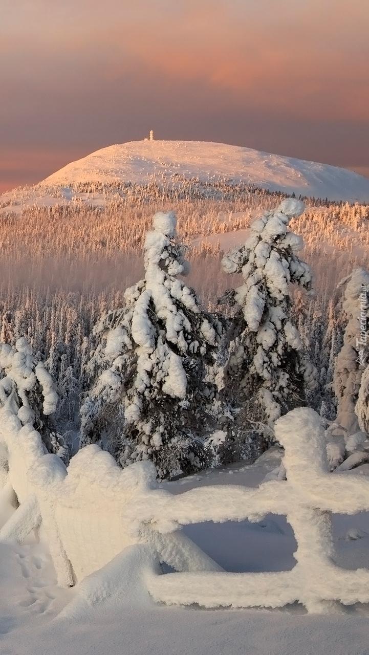 Ośnieżone drzewa i ogrodzenie na tle góry