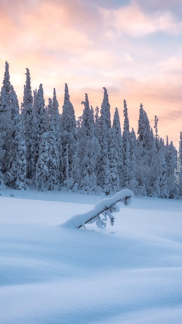 Ośnieżone drzewa i rośliny w śniegu