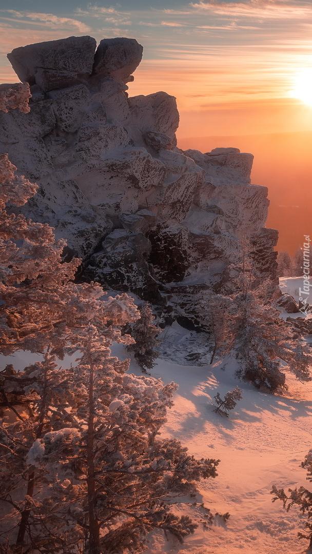 Ośnieżone drzewa i skały w blasku słońca