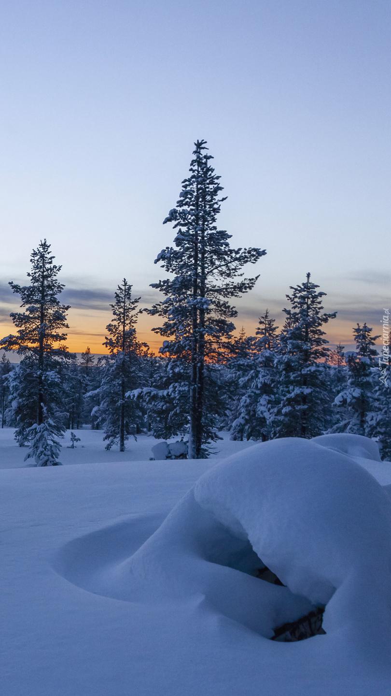Ośnieżone drzewa i zaspy
