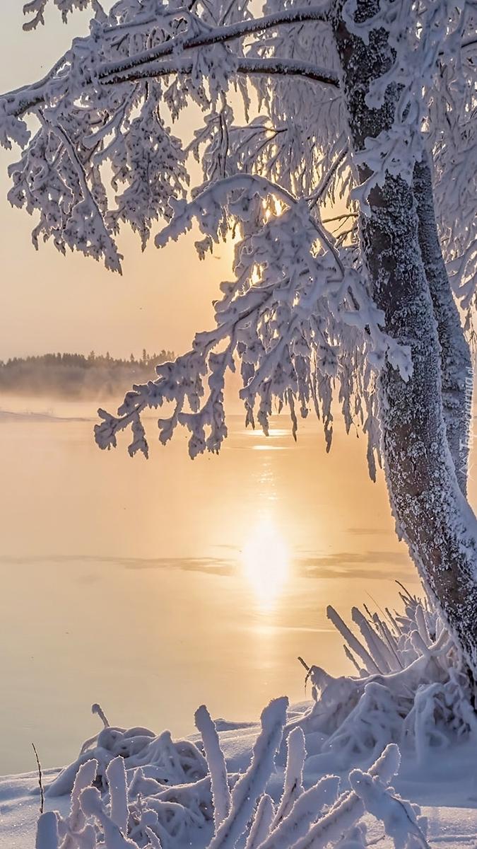 Ośnieżone drzewa na brzegu jeziora