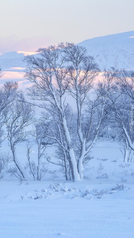 Ośnieżone drzewa na tle gór Rannoch Moor
