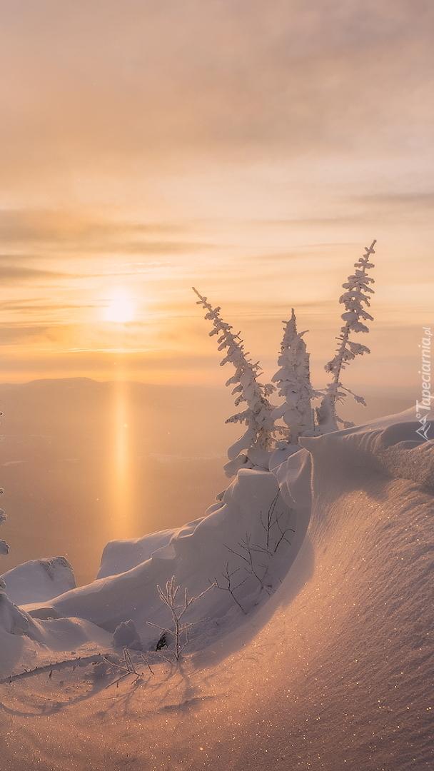 Ośnieżone drzewa na tle wschodu słońca